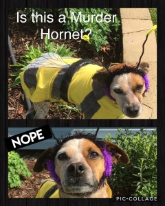 Dog in a bee costume