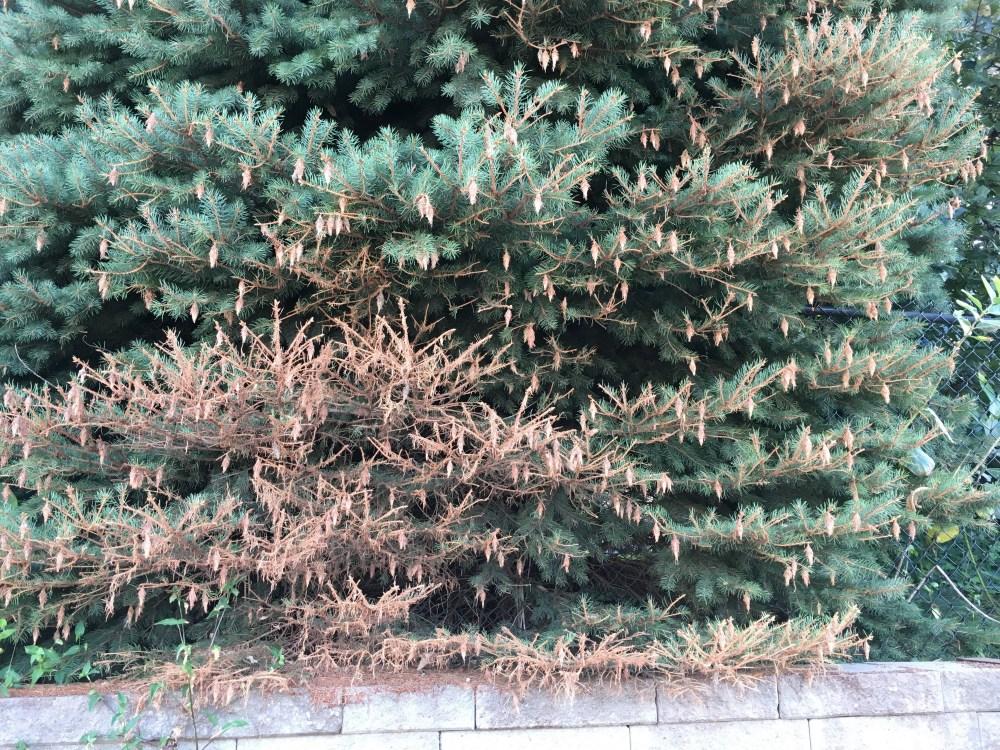 Damage - Neighborhood trees