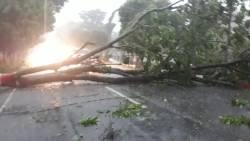 Hujan Deras Angin Kencang, Pohon Besar di Pinggir Jalan Ahmad Yani Purwodadi Rubuh