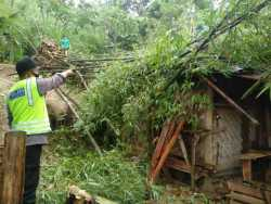 Diterpa Angin Kencang, Rumpun Pohon Bambu Tumbang Timpa Rumah di Jatipohon