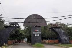 Kawasan Wisata Semarang Zoo Kedepankan Disiplin Protokol Kesehatan