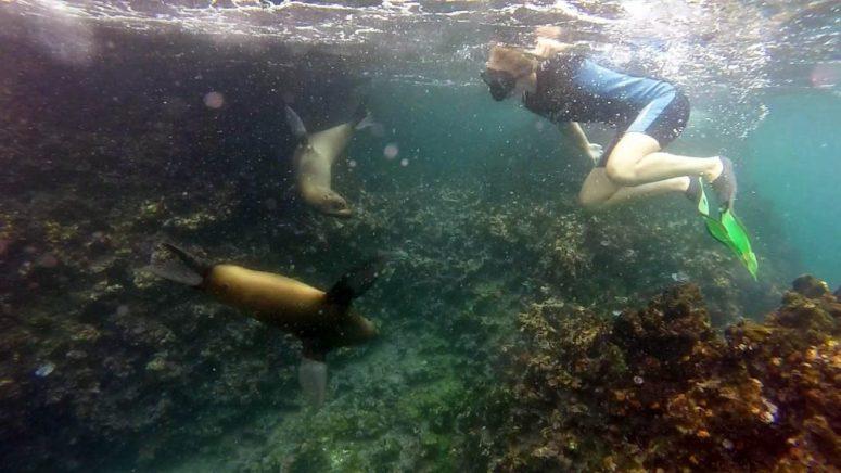 Zwemmen met zeeleeuwen
