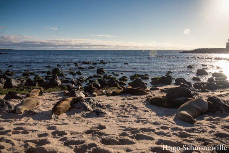 Zeeleeuwen Playa Punta Carola