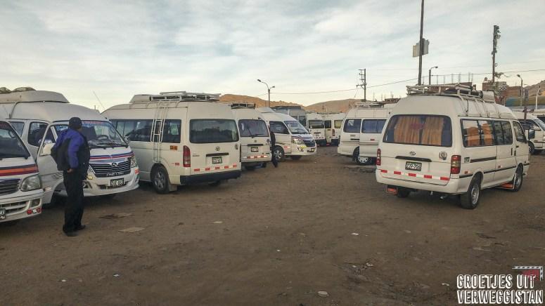 Veld vol met kleine witte busjes in Puno