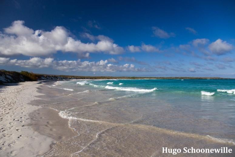 Wit zandstrand met blauwe zee: alles om te doen op het eiland Santa Cruz op de Gálapagos