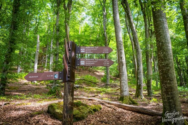 Bordjes in het bos die de route van de Mullerthal Trail aangeven.