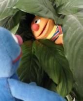 Nicias & Ernie