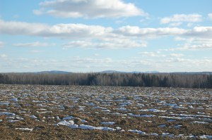 Potato field with snow in the furrows
