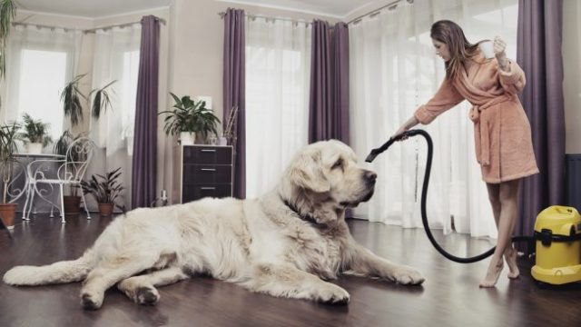 Image result for pet hair