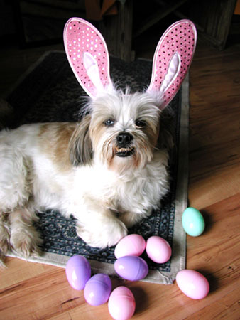 Lacy Been - Guarding theEggs