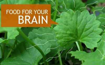 Gotu Kola – The Brain Enhancing Adaptogen