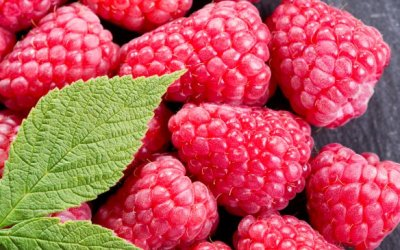 Nutraceutical Benefits – Raspberry Ketones
