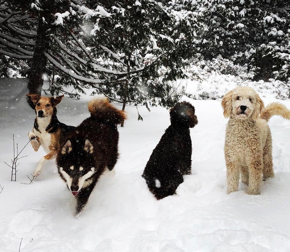 4 dogs running in snow in private off-leash dog park