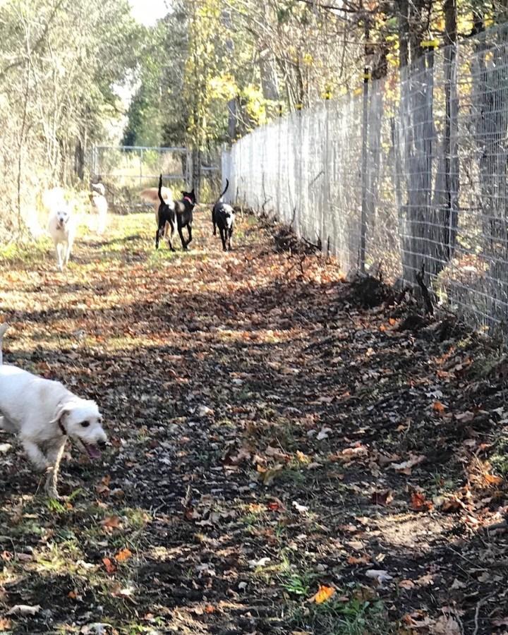 A picture of dogs running trails.  The image highlights the six foot high fencing that lines the parks.