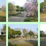 神宮寺公園多目的広場