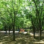 上柴中央公園