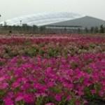 熊谷スポーツ文化公園(ソフトボール場/ラグビー場/陸上競技場)