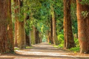 trees, dendrologists, burden of proof