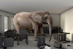 elephant, logical, fallacy