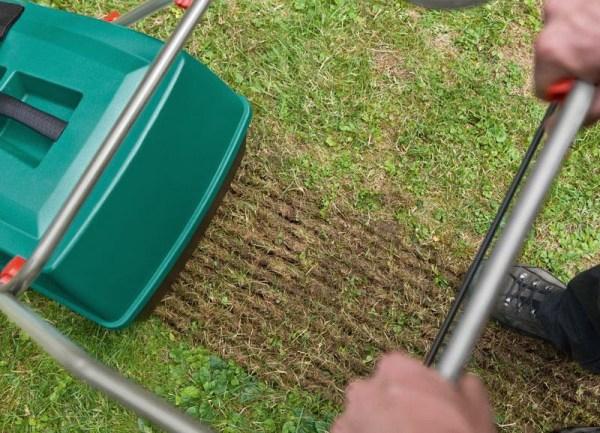 Как правильно посеять газонную траву осенью - Рыболовный ...