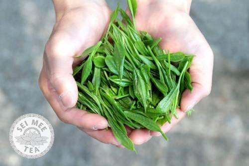 leaf tea