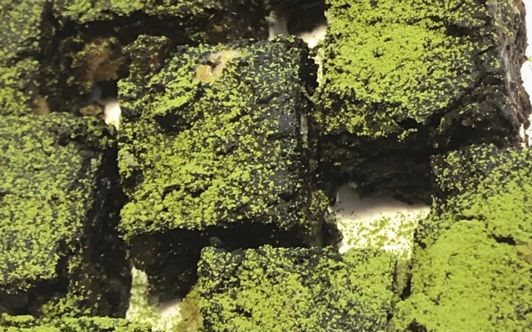 adzuki truffles with matcha