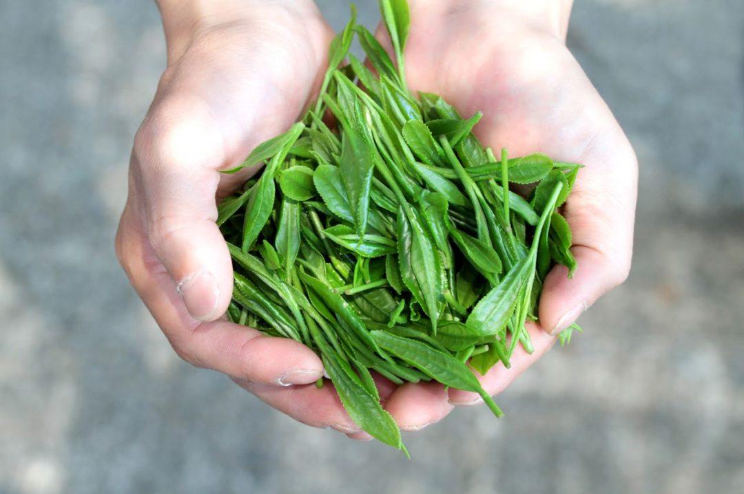 pure tea leaves