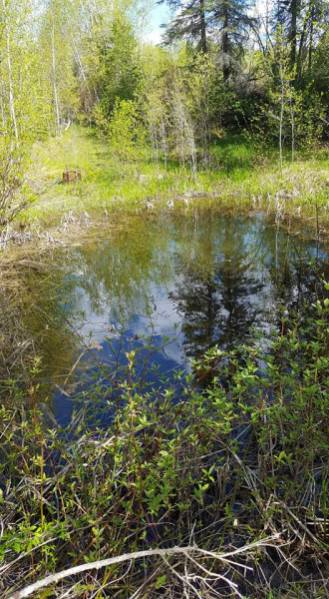 Old Catchment Irrigation Pond built by a previous property owner.