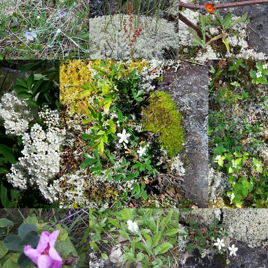 A number of the wild flowers we discovered on a quick walk on the rocks at the farm today.