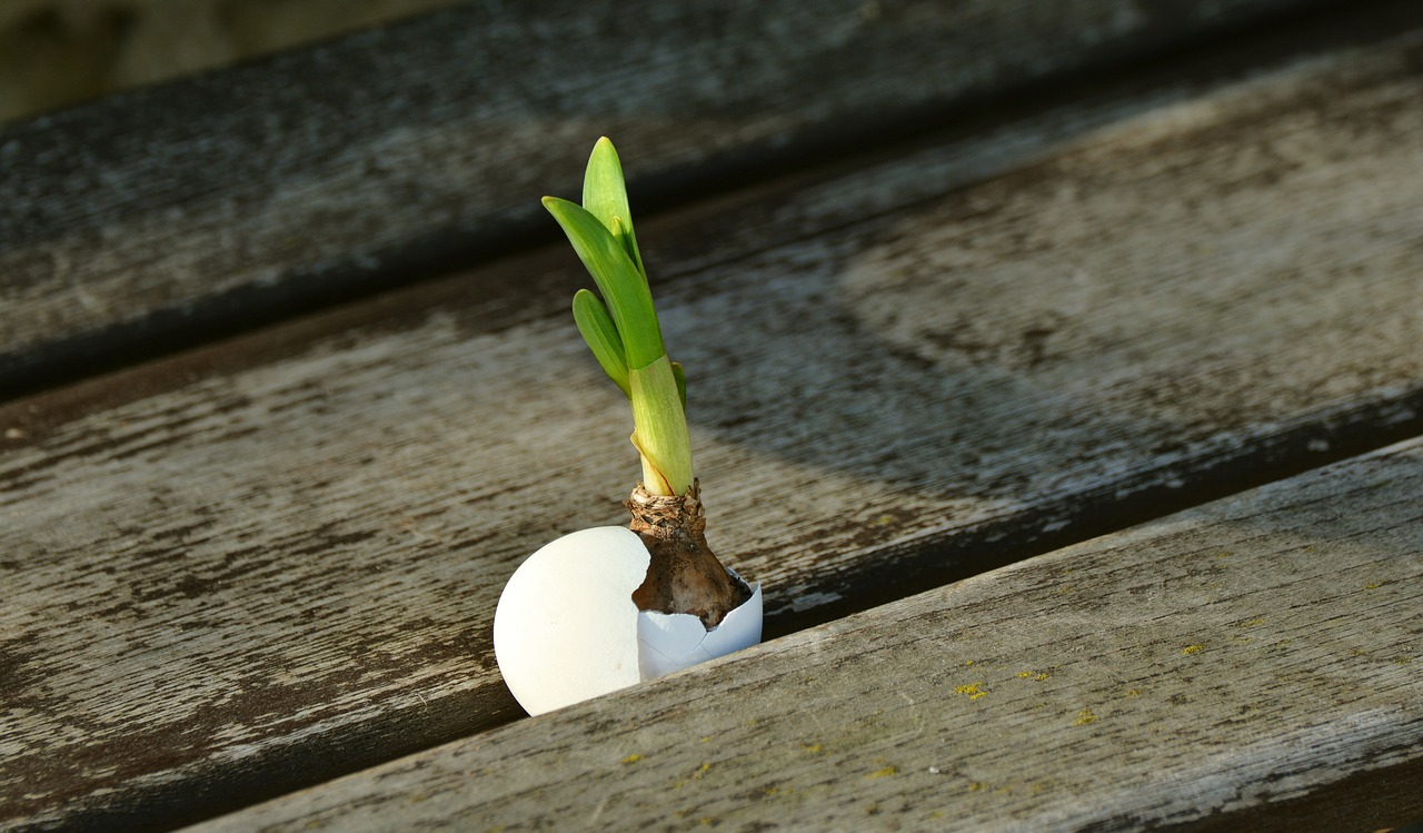 onion-2013174_1280