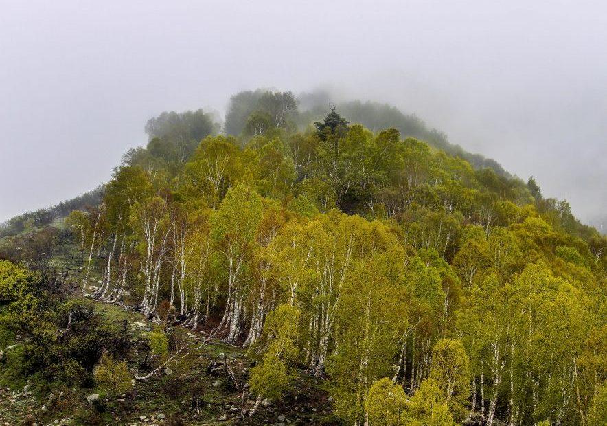 Jammu Kashmir Re-Organisation afforestation funds
