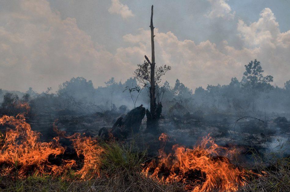 क्या है पर्यावरण प्रभाव आकलन क़ानून और क्यों ज़रूरी है इसे जानना ?