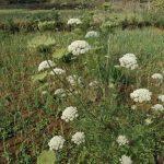Organic-farming-pic-2-1.jpg