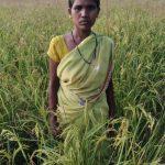 Organic-farming-pic-3-2.jpg