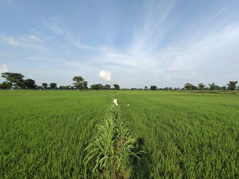 bindukhatta farmers facing many problems
