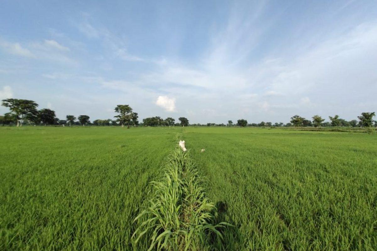 बिन्दुखत्ता के छोटी जोत वाले किसान क्यों हैं परेशान?