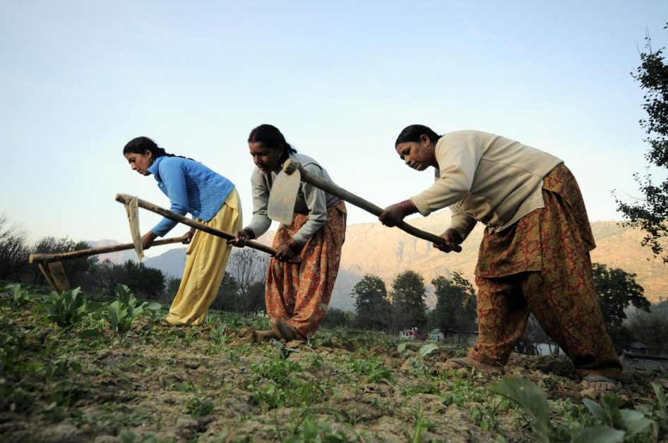 कुपोषण से लड़ने के लिए बंजर ज़मीन पर खेती करती महिलाएं
