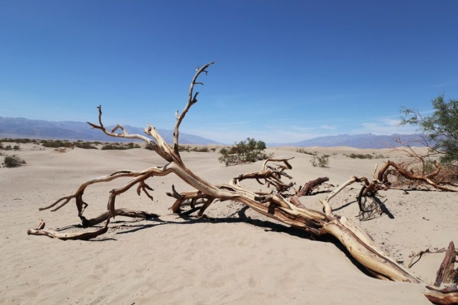 Heat could kill 83 million