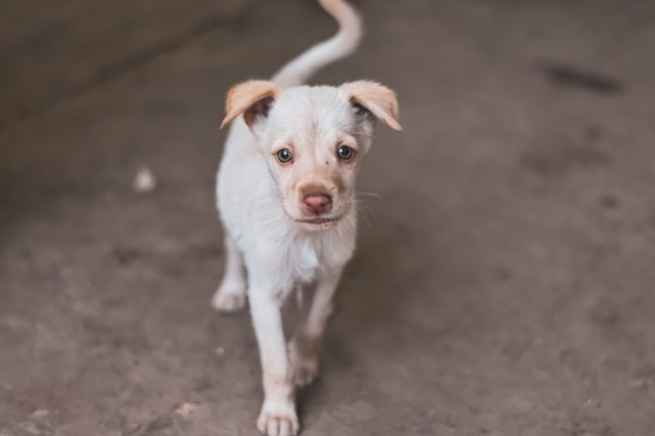 Over 100 stray dogs poisoned to death in Karnataka