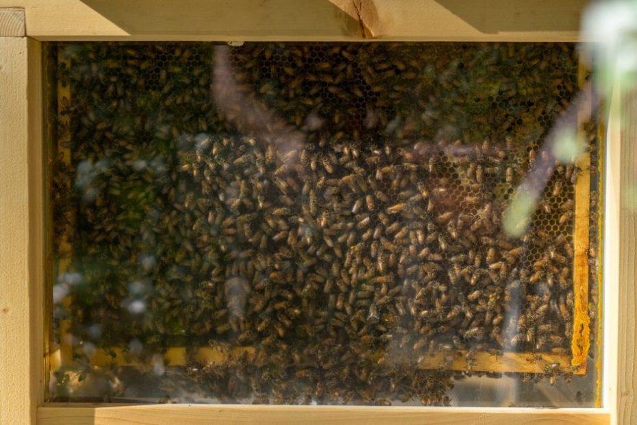 Journey of Kashmiri Beekeepers