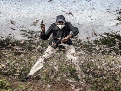 devastating pests that affect the crops