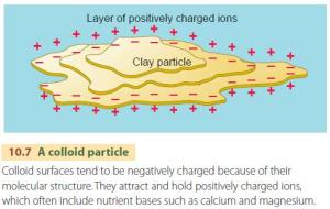 clay particle