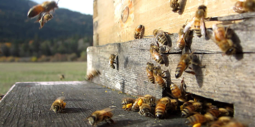 Beekeeping for Beginners