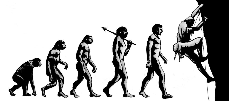 Evolución del cerebro en el ser humano.