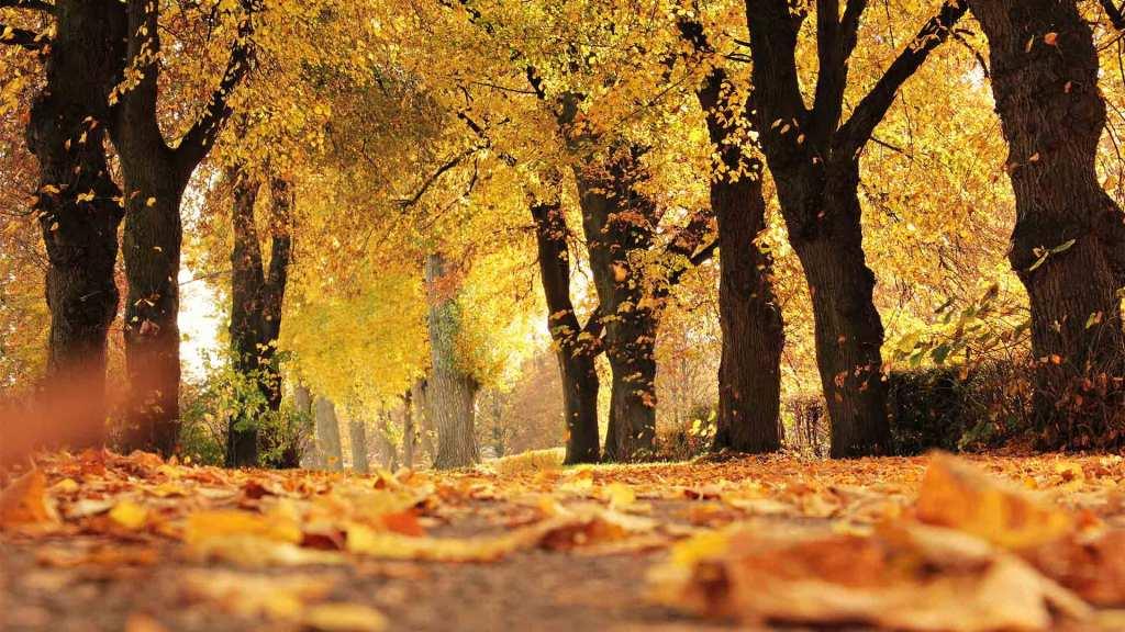 Fit durch den Herbst im Fitnessstudio