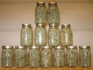 Storing dried marijuana