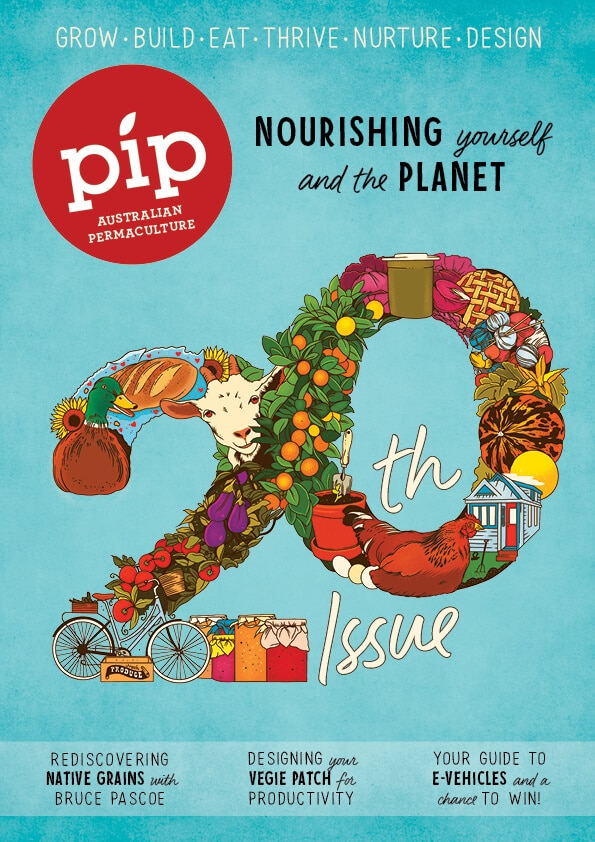 Pip_20_Cover
