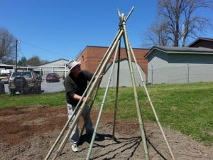 Bamboo bean teepee construction with farmer Charlie Callison