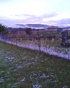 shredded paper in cemetery fence