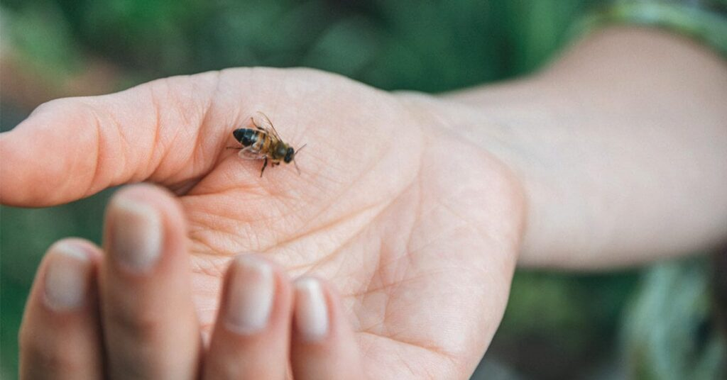 Bee sting treatment: What is good for a bee sting?
